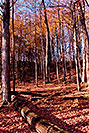 /images/133/1997-10-bruce-trail-fall2-v.jpg - #00062: Bruce Trail in fall … Oct 1997 -- Bruce Trail, Halton, Ontario.Canada