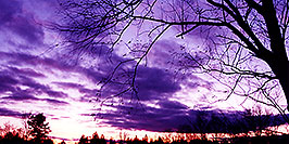 /images/133/1997-10-bruce-trail-purple-pano.jpg - #00068: Bruce Trail … Oct 1997 -- Bruce Trail, Halton, Ontario.Canada