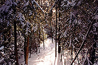 /images/133/1997-12-bruce-trail-narrow.jpg - #00077: Bruce Trail in winter  … Dec 1997 -- Bruce Trail, Halton, Ontario.Canada
