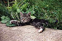 /images/133/1998-07-ohio-kitten-grass2.jpg - 00100: stray cats moving in … Akron, Ohio … July 1998 -- Akron, Ohio