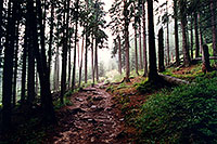 /images/133/1998-07-slovakia-tatry-les.jpg - Special > Woods