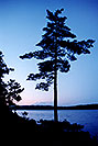 /images/133/1998-09-tema-nip-tree-eveni.jpg - #00157: evening at Anima Nipissing Lake … Sept 1998 -- Anima Nipissing Lake, Temagami, Ontario.Canada