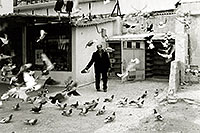 /images/133/1998-12-athens-pigeons.jpg - #00179: The man who owned pigeons in Athens … Jan 1, 1999 -- Athens, Greece