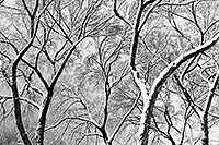 /images/133/1999-02-chicago-trees-bw2.jpg - #00264: a snowy February along Michigan Avenue … Feb 1999 -- Chicago, Illinois