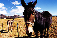 /images/133/1999-09-colorado-horse-donk.jpg - #00375: near Leadville, Colorado … Sept 1999 -- Leadville, Colorado