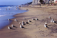 /images/133/2000-02-cali-beach-seagulls1.jpg - #00458: Seagulls in South Carlsbad … Nov 2000 -- South Carlsbad, California