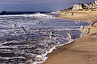 /images/133/2000-02-cali-beach-seagulls2.jpg - #00459: Seagulls in South Carlsbad … Nov 2000 -- South Carlsbad, California