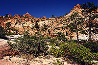 /images/133/2000-04-greater-zion-top1.jpg - #00477: Backpacking with Rakesh … April 2000 -- Greater Zion Wilderness, Utah