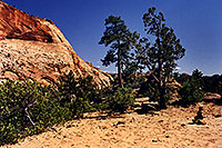 /images/133/2000-04-greater-zion-top2.jpg - #00478: Backpacking with Rakesh … April 2000 -- Greater Zion Wilderness, Utah