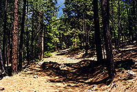/images/133/2000-08-flagstaff-woods1.jpg - #00550: hiking by Flagstaff (testing Arcteryx blue backpack) … August 2000 -- Flagstaff, Arizona