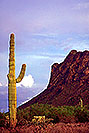 /images/133/2000-08-picacho-peak-cactus.jpg - #00580: Picacho Peak, 50miles south of Phoenix … August 2000 -- Picacho Peak, Arizona
