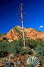 /images/133/2000-08-sedona-dogie-trail2-v.jpg - #00583: Dogie Trail in Sycamore Canyon … August 2000 -- Sedona, Arizona