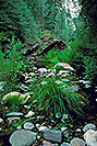 /images/133/2000-08-sedona-west-fork2.jpg - #00608: West Fork Trail in Sedona … April 2000 -- Sedona, Arizona