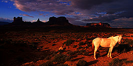 /images/133/2000-09-monvalley-horse-pano.jpg - #00668: Navajo horses at  6am … Sept 2000 -- Monument Valley, Utah