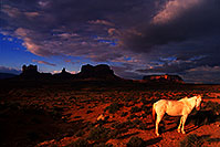 /images/133/2000-09-monvalley-horse.jpg - #00667: White Navajo horse at  6am … Sept 2000 -- Monument Valley, Utah