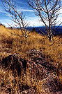 /images/133/2000-10-williams-meadow2-v.jpg - #00695: Fall at Williams … near Flagstaff … March 2000 -- Williams, Arizona
