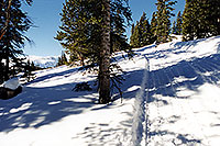 /images/133/2001-01-07-snowcat-tracks-trees.jpg - #00738: morning at 11,500ft … Jan 2001 -- Leadville, Colorado