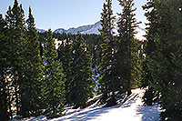 /images/133/2001-01-07-trees-sun-star2.jpg - #00741: morning at 11,500ft … Jan 2001 -- Leadville, Colorado