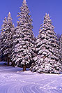 /images/133/2001-03-snowbowl-winter-trees.jpg - #00787: Snowy trees in Snowbowl … March 2001 -- Snowbowl, Arizona