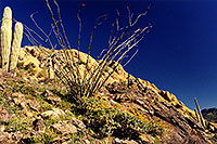 /images/133/2001-04-supersti-cactus.jpg - #00789: Superstitions … July 2001 -- Superstitions, Arizona