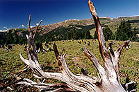 /images/133/2001-07-leadville-no-trees.jpg - #00834: morning at 11,500ft -- Chalk Mountain, Leadville, Colorado