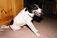 /images/133/2001-11-annie.jpg - #00920: Annie in Cave Creek … Nov 2001 -- Cave Creek, Arizona
