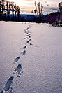 /images/133/2003-02-snowbowl-footsteps-in-snow.jpg - #01137: my footprints near Snowbowl, on a late afternoon … Feb 2003 -- Snowbowl, Arizona
