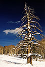 /images/133/2003-02-snowbowl-tree-v.jpg - #01122: Snowbowl in February … Feb 2003 -- Snowbowl, Arizona