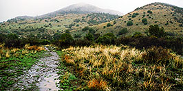 /images/133/2003-03-reavis-rain2-pano.jpg - #01174: wet Reavis Ranch Trail in Superstition Mountains … March 2003 -- Superstitions, Arizona