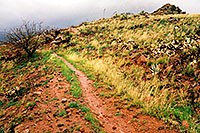 /images/133/2003-03-reavis-rain4.jpg - #01176: wet Reavis Ranch Trail in Superstition Mountains … March 2003 -- Superstitions, Arizona