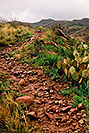 /images/133/2003-03-reavis-trail2-v.jpg - #01161: wet Reavis Ranch Trail in Superstition Mountains … March 2003 -- Superstitions, Arizona