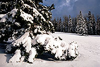 /images/133/2003-03-snowbowl-tree-snow.jpg - #01189: Snowbowl … March 2003 -- Snowbowl, Arizona