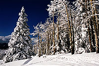 /images/133/2003-03-snowbowl-trees-left.jpg - #01188: Snowbowl … March 2003 -- Snowbowl, Arizona