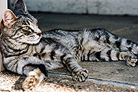 /images/133/2003-05-paravil-cat09.jpg - #01216: The prettiest, friendliest stray cat … May 2003 -- Phoenix, Arizona