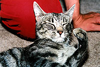 /images/133/2003-05-paravil-cat12.jpg - #01218: The prettiest, friendliest stray cat … May 2003 -- Phoenix, Arizona