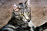 /images/133/2003-05-paravil-cat14.jpg - #01220: The prettiest, friendliest stray cat … May 2003 -- Phoenix, Arizona