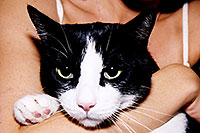 /images/133/2003-08-sonia-tuxedo1.jpg - #01326: Tuxedo cat in Santa Fe … August 2003 -- Santa Fe, New Mexico