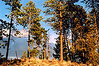 /images/133/2004-04-sedalia-trees-golde.jpg - #01491: views of Sedalia … April 2004 -- Sedalia, Colorado