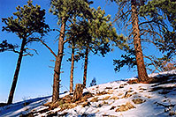 /images/133/2004-04-sedalia-trees-snow.jpg - #01474: views of Sedalia … April 2004 -- Sedalia, Colorado