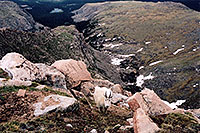 /images/133/2004-06-mtevans-goats2.jpg - #01549: Mountain Goats at Mt Evans … June 2004 -- Mt Evans, Colorado