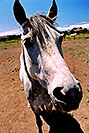 /images/133/2004-07-flagstaff-horses1.jpg - #01686: Snowbowl, Arizona … July 2004 -- Arizona
