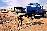 /images/133/2004-07-powell2-dog1.jpg - #01753: (Boxer) … Lake Powell … July 2004 -- Lone Rock, Lake Powell, Utah