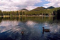 /images/133/2004-07-rocky-lake-ducks.jpg - 01819: ducks at Sprague Lake … July 2004 -- Sprague Lake, Rocky Mountain National Park, Colorado
