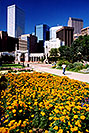 /images/133/2004-08-denver-flowers.jpg - #01867: Denver in August … August 2004 -- Denver, Colorado