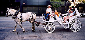 /images/133/2004-08-denver-horse1-2.jpg - #01872: Horse Carriages in Denver … images of Denver  … July 2004 -- Denver, Colorado