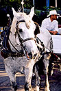 /images/133/2004-08-denver-horse1.jpg - #01871: Horse Carriages in Denver … images of Denver  … July 2004 -- Denver, Colorado