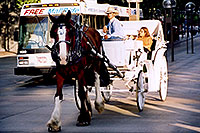 /images/133/2004-08-denver-horse2-1.jpg - #01873: Horse Carriages in Denver … images of Denver  … July 2004 -- Denver, Colorado