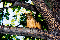 /images/133/2004-08-denver-squirrel-tre.jpg - #01899: Squirrel in Denver … August 2004 -- Denver, Colorado