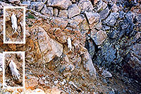 /images/133/2004-08-mountain-goat-wall.jpg - #01945: Mountain Goat running down a rock wall at Mt Evans … August 2004 -- Mt Evans, Colorado