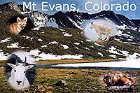 /images/133/2004-08-mt-evans-mtns2-text.jpg - #01934: Mt Evans peaks … view from Summit Lake … August 2004 -- Mt Evans, Colorado